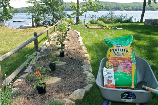 Ready To Plant In The Maine Garden