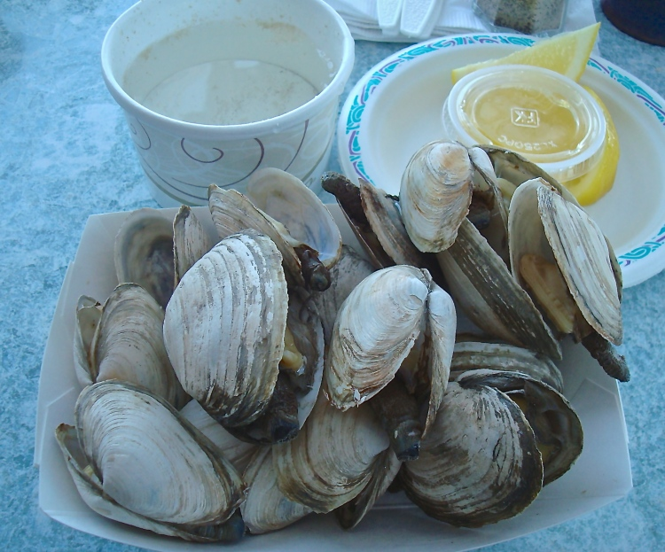 Steamers (Clams)