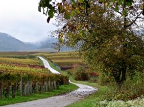 Along the Wine Road In Alsace
