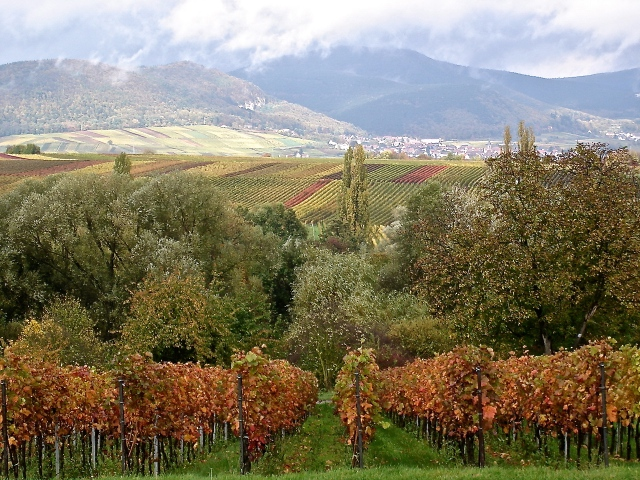 Small Towns With Famous Vineyards