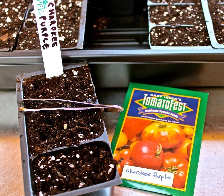 Tweezers Help When Planting Tiny Seeds