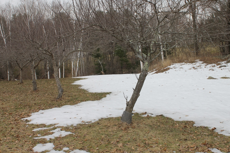 Patches Of Snow In April