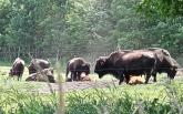 Beech Hill Bison Farm