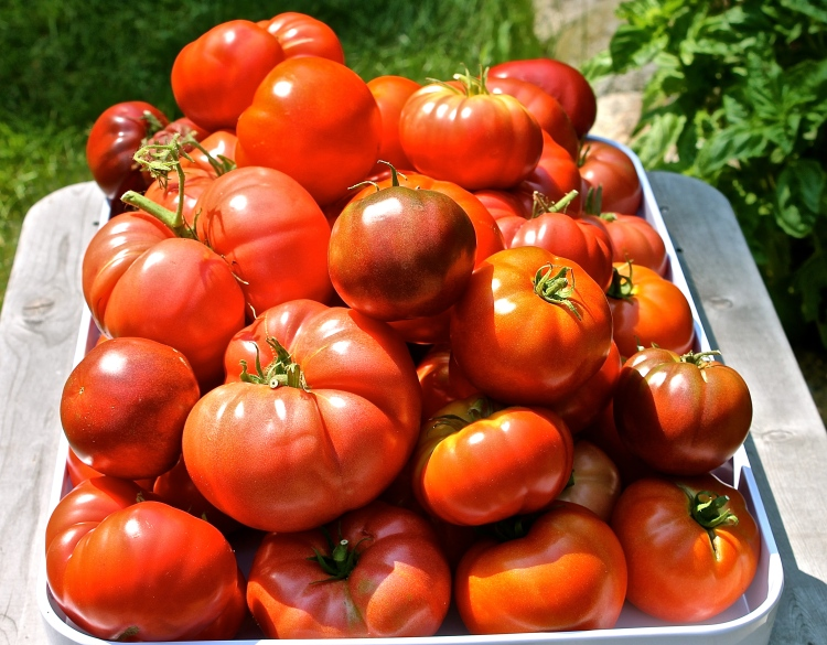 Vine Ripe Tomatoes From Our Garden