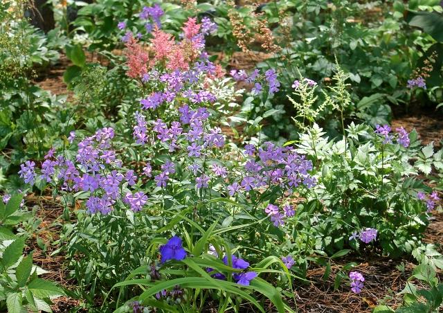 Shade Garden In Bloom