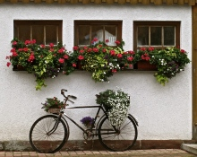 Window Boxes And Bicycle Overflowing With Flowers In the Black Forest