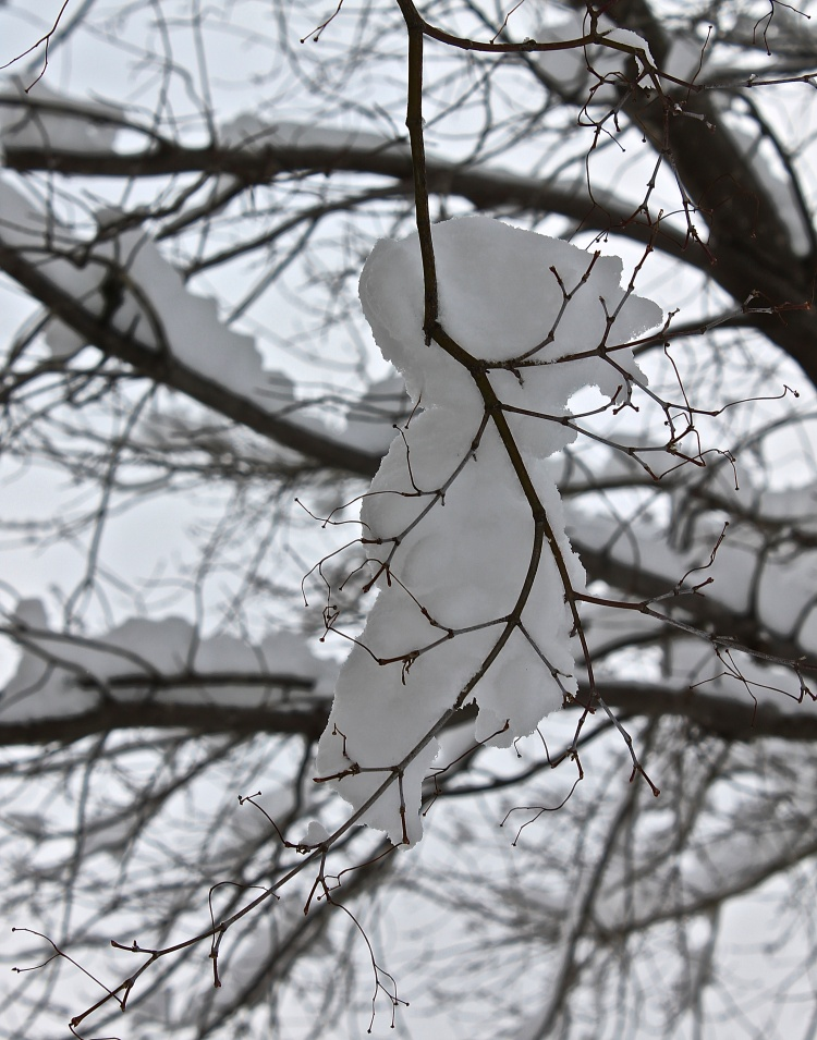 The Smallest Of Branches Hold Wet Sticky Snow