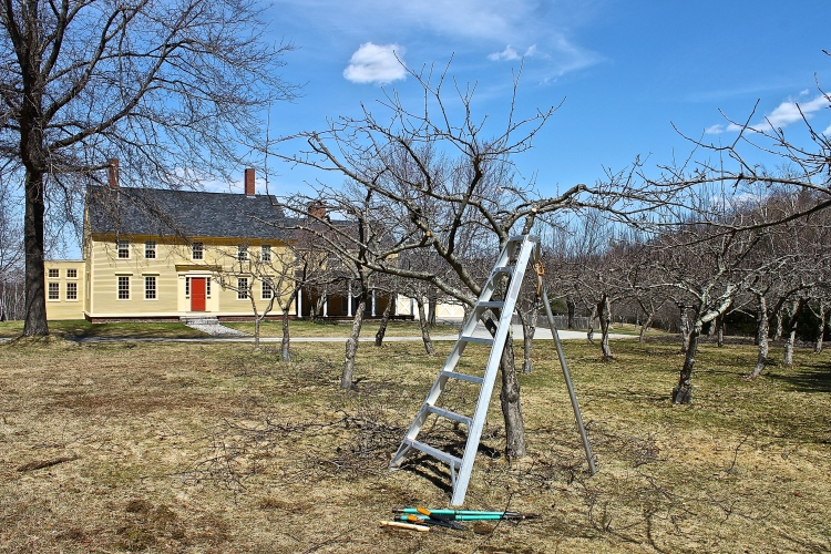 An Apple Ladder Is Study Enough To Safely Prune Tall Apple Trees