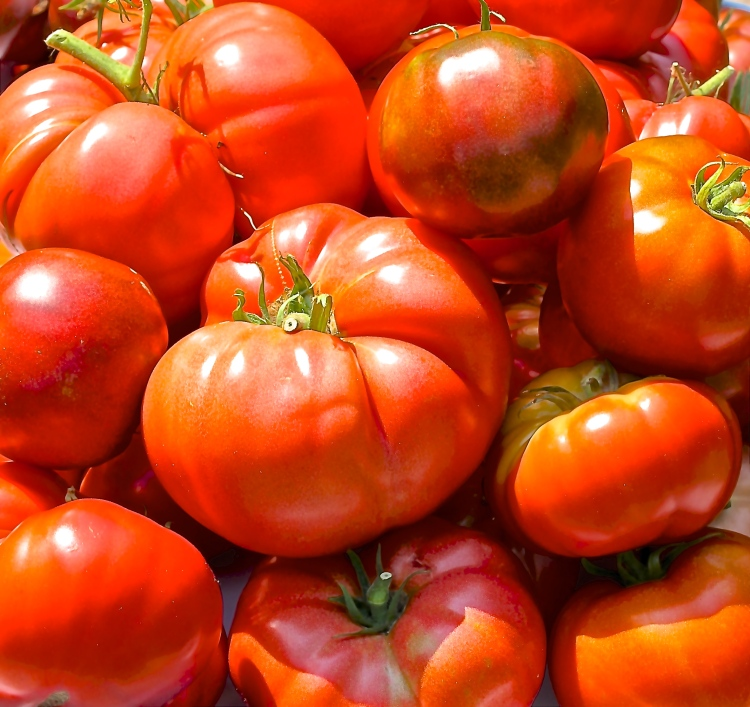 A Bounty Of Tomatoes