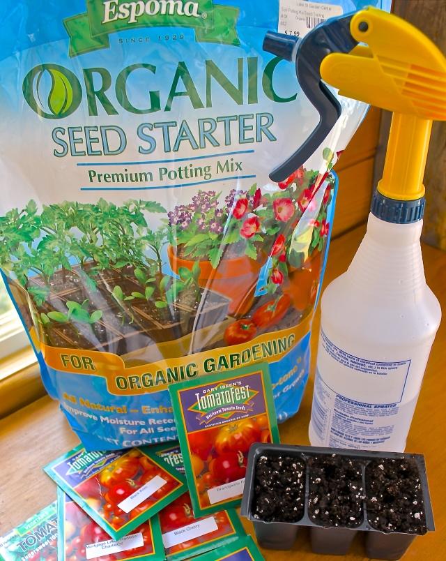 Starting Tomato Seeds