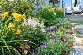 Each Year The Perennial Gardens Have To Survive Maine's Harsh Winters
