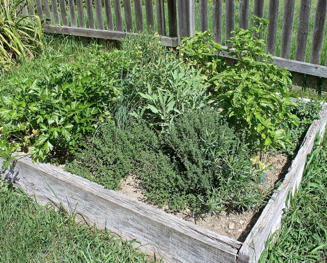 Herb Box Planted With Parsley, Sage, Rosemary, Thyme, Tarragon And Basil