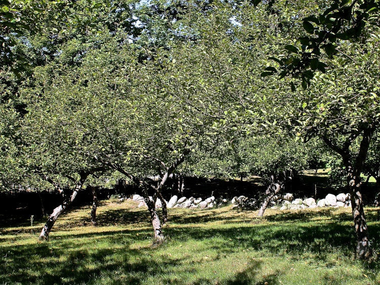 There Will Be No Cortland And Mutzu Apples This Year