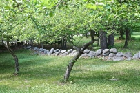 Old Rock Walls Border The Orchard