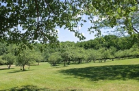 View Of The Back Apple Orchard