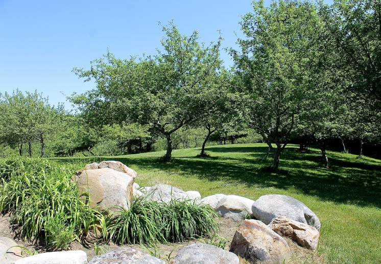 Apple Trees On The Crest Of a Hill By The Lily Rock Garden