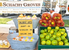 Vero Beach Citrus Fresh From The Grove