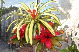 Bromeliads And Orchids