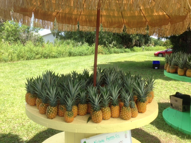 Fresh Picked Pineapples At Nature Farms
