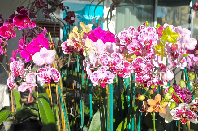 Beautiful Orchids Are Raised And Successfully Raised In This Tropical Climate