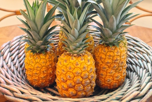 Freshly Picked, Perfectly Ripe Pineapples
