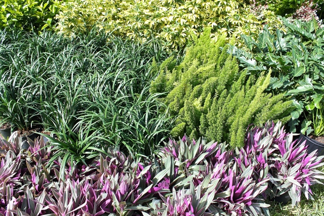 Plants Of Different Colors And Textures Add Interest In The Garden