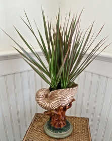 Plant in Shell Vase