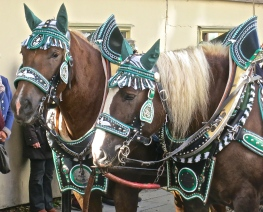 Handsome Looking Horses In Traditional Harnesses