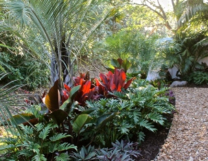 Tropical Garden With Triangle Palm, Xanadu, Congo, Cordyline And Oyster Plants