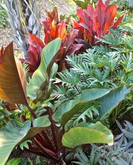 Varying Shapes Of Colorful Foliage