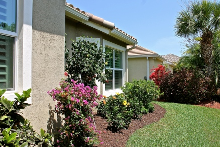 Newly Planted Bougainvillea And Hibiscus Add A Pop Of Color To The Back Yard