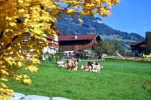 Grossarl Pasture