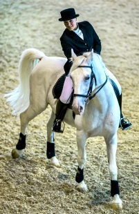 Take A Riding Lesson On A Lipperzaner Stallion