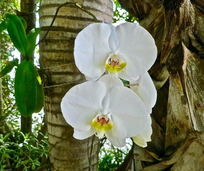 Tropical Orchids In The Garden