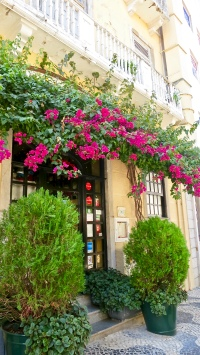 Bougainvillea Covered Entrance