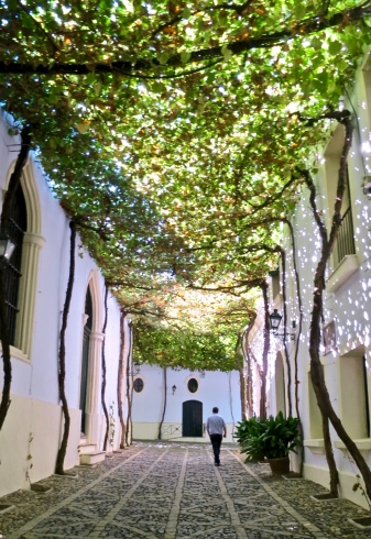 Grapevine Covered Street Among González Byass Bodegas