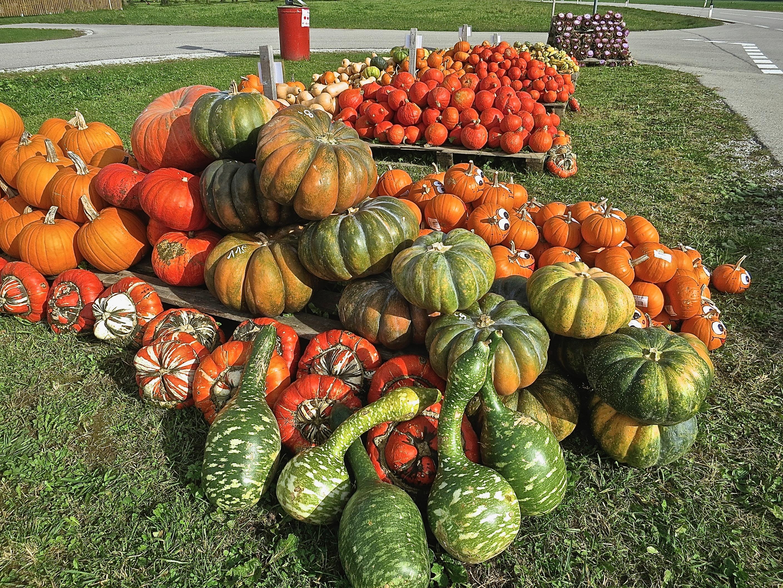 fall pumpkins on display