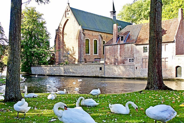 swans of bruges